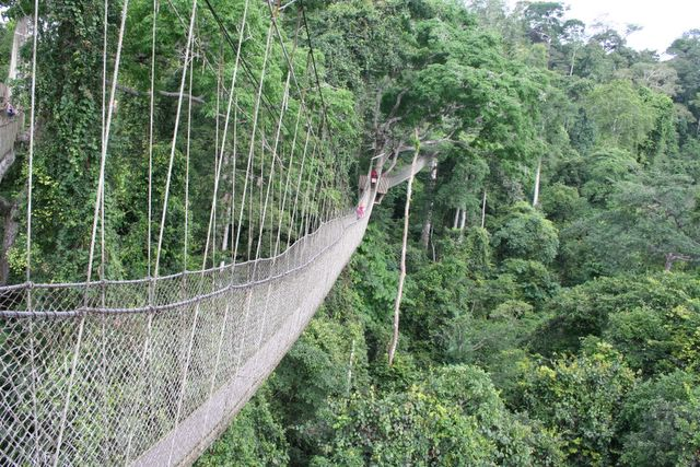 Excursion to Kakum National Park